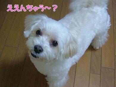 image1074.jpg