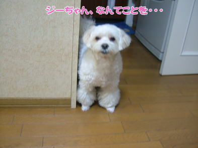 image1077.jpg