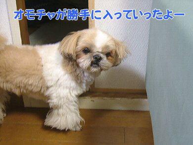 image1078.jpg