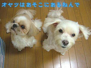 image108.jpg