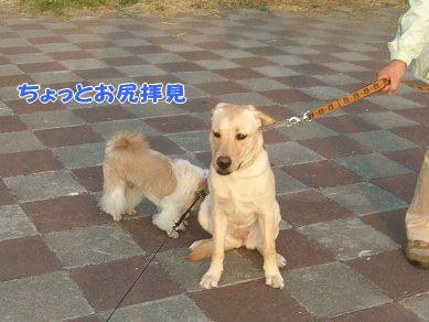 image1081.jpg