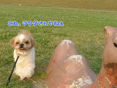 image1083.jpg