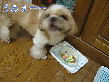 image109.jpg