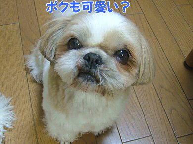 image1091.jpg