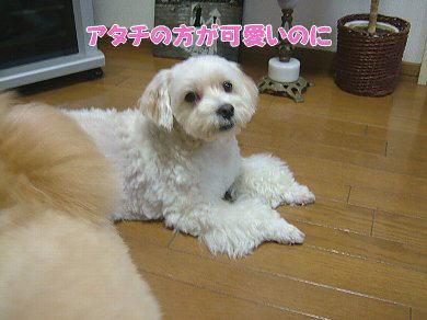 image1092.jpg