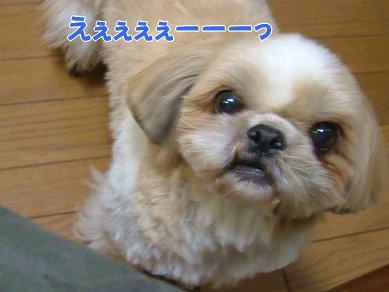image1105.jpg