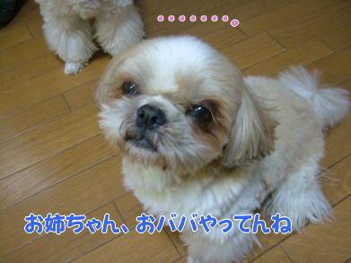 image1106.jpg