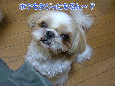 image1107.jpg