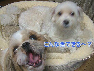 image1108.jpg