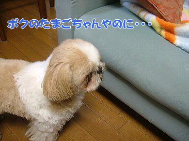 image1113.jpg