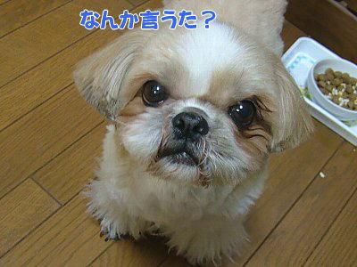 image1130.jpg