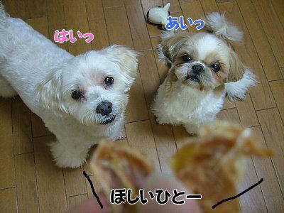 image1134.jpg