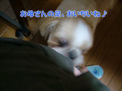 image1135.jpg