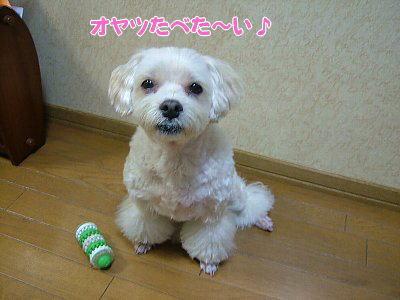 image1138.jpg