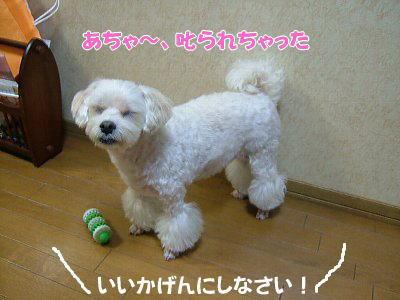 image1140.jpg