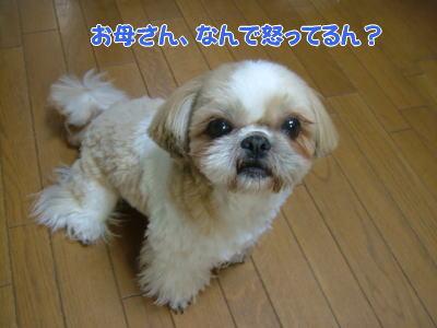 image1141.jpg