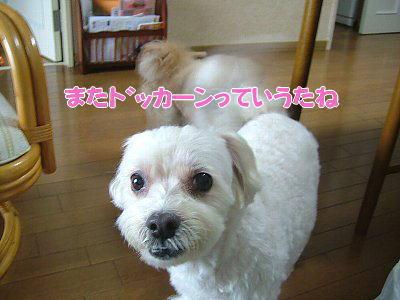 image1148.jpg