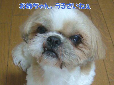 image1151.jpg