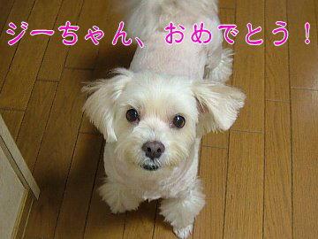 image116.jpg
