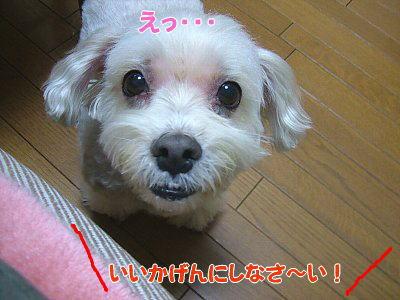 image1160.jpg