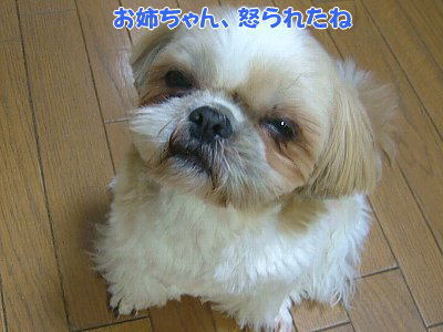 image1163.jpg