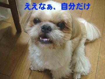 image117.jpg