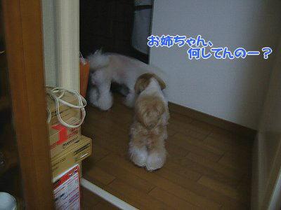 image1174.jpg