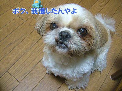image1175.jpg
