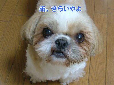 image1177.jpg