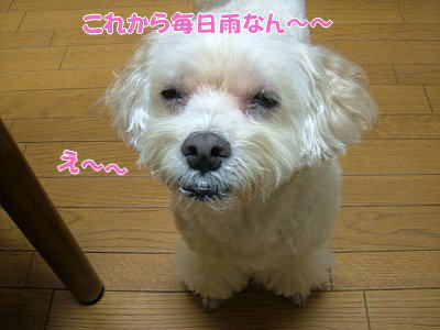 image1178.jpg