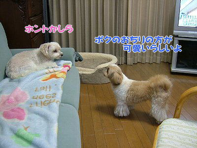 image1180.jpg