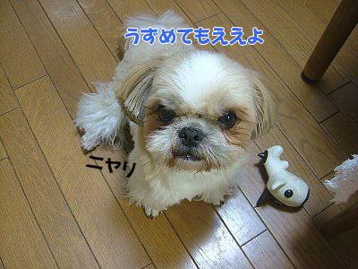 image1181.jpg