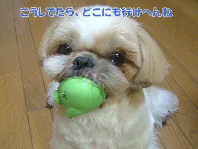 image1199.jpg