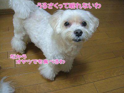 image1205.jpg