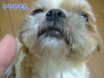 image1209.jpg