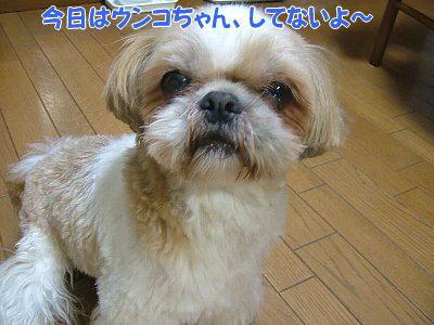 image1225.jpg