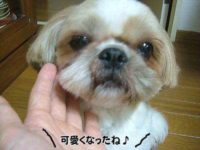 image1235.jpg