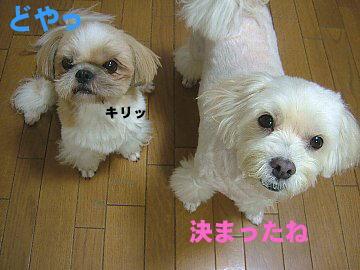 image125.jpg