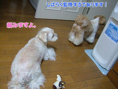 image1257.jpg