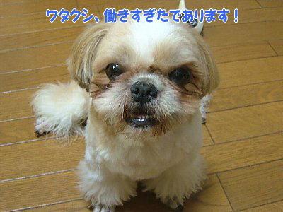 image1259.jpg