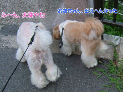image1266.jpg