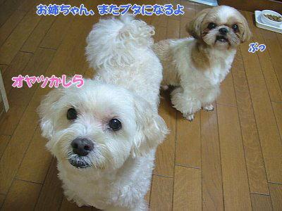 image1283.jpg