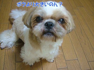 image1295.jpg