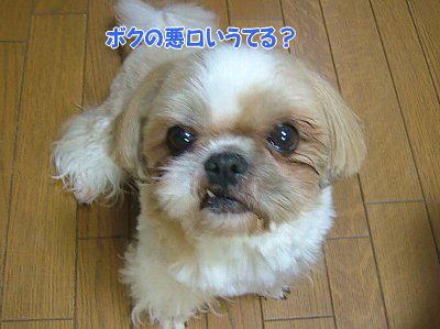 image1309.jpg