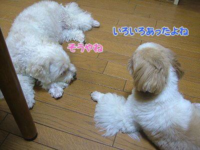 image1311.jpg