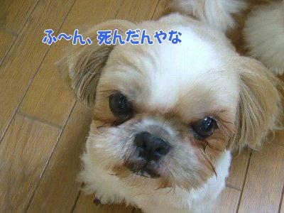 image1329.jpg