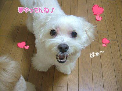 image1332.jpg