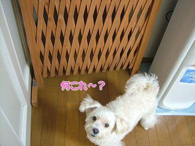 image1366.jpg