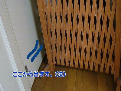 image1368.jpg