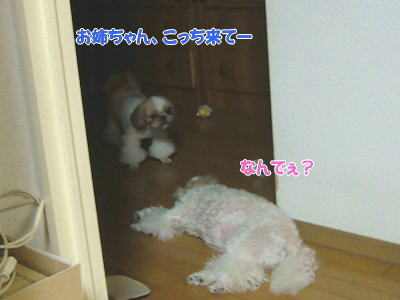 image1372.jpg